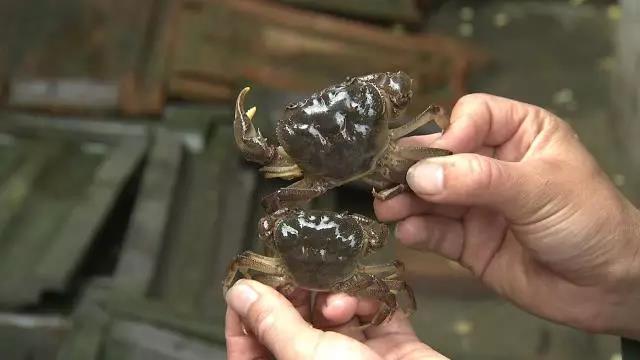 半两重的螃蟹为什么比半斤重的螃蟹贵呢?