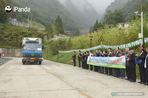 运送熊猫的车队从卧龙神树坪基地正式启程。