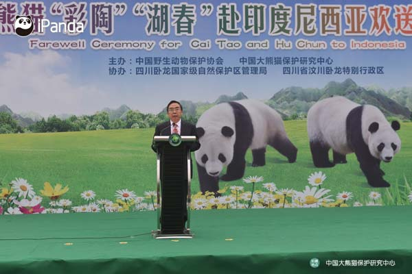 中国大熊猫保护研究中心常务副主任张和民致辞。