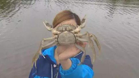 您见过需要办身份证的螃蟹吗?