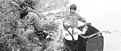 工作人员在寻找逃跑的鳄鱼