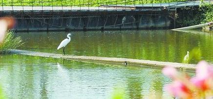 """""""花田美事""""优美的环境引来白鹭等鸟类栖息"""