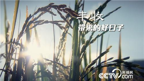 乡土节目看点:丰收带来的好日子 10月5日