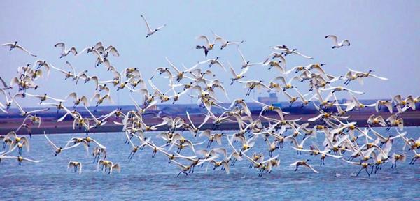 """""""台江黑琵季""""水鸟齐飞,景色怡人。(图片来源于台湾观光部门网站)"""