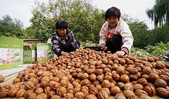 石墙沟村村民刘金兰(左)和女儿准备将晾晒好的核桃装盒(10月6日摄)。