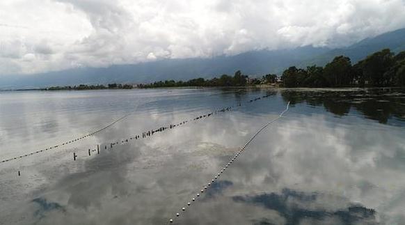 9月7日拍摄的云南省大理市古生村建在洱海上的拦污设施。