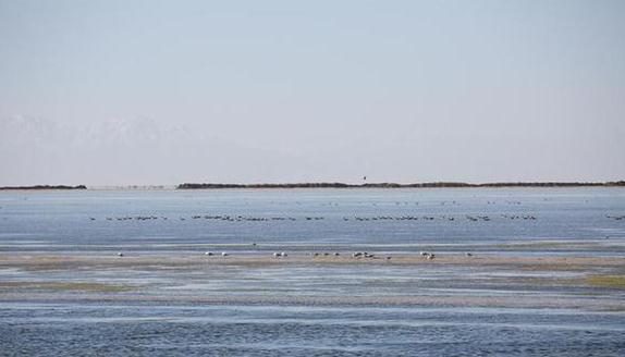 鸟儿在青海察尔汗盐湖边的淡水湖上栖息