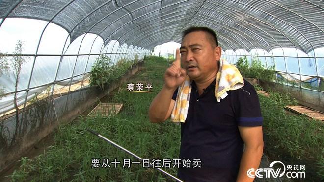 [久久热]蔡荣平:蔡疯子养蛙价格翻一倍
