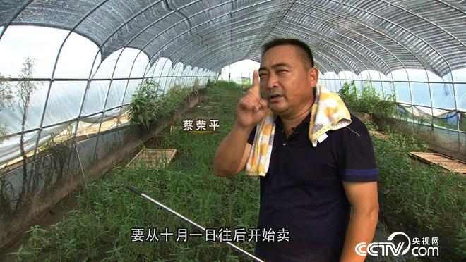 [vinbet浩博首页]蔡荣平:蔡疯子养蛙价格翻一倍