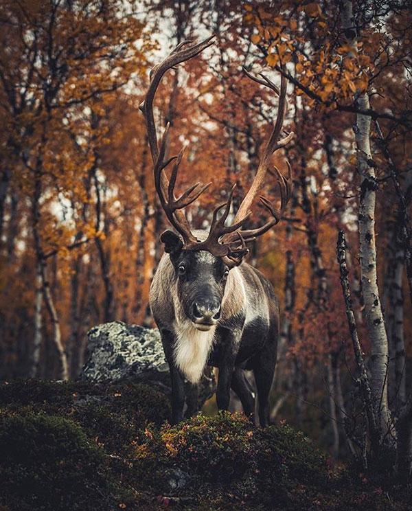 透过镜头,探索大自然中生活着的野生小动物