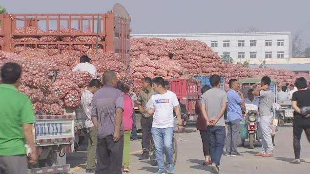 这里的大蒜有何神奇之处?竟销往世界各地!