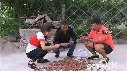[致富经]王秀坡:如何玩转核桃,年赚千万