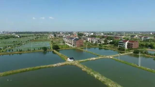 这条鱼竟然给这个江南小镇带来了2个亿的产值!