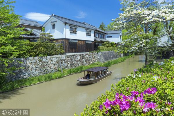 日本京都南区,寺庙花园中的树木和蓝天。