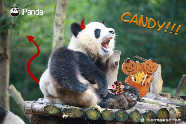 熊孩子想方设法要糖果