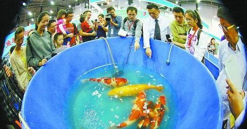 休闲渔业博览会注重互动体验
