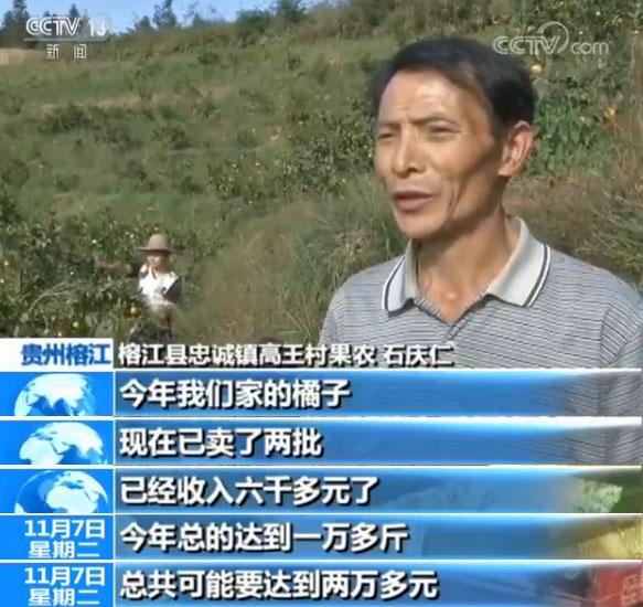 贵州榕江:水果成熟果农采摘忙