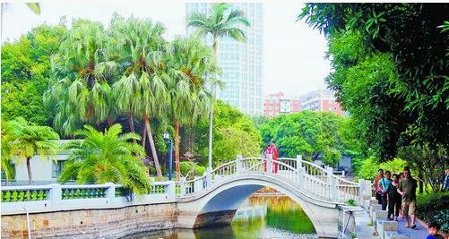 昨日厦门阴天,图为中山公园美景。
