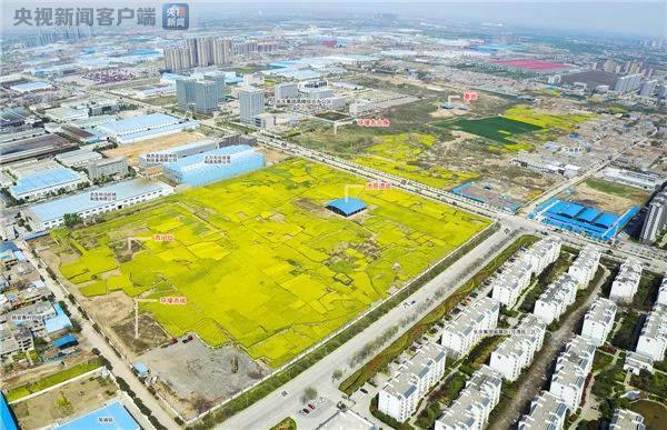 杨官寨遗址庙底沟文化墓地发掘区