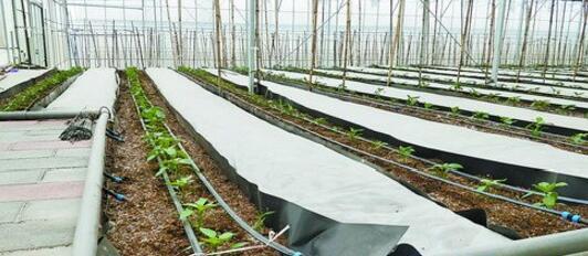 鑫美园合作社的滴灌设施