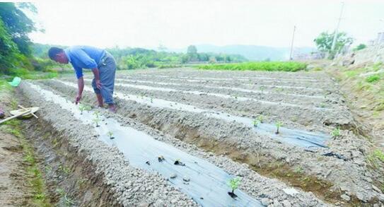 由于缺水,就算是种植耐旱的马铃薯也让村民感到很忧心。