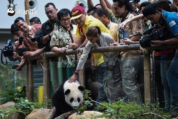 """大熊猫""""暖暖""""深受游客喜爱"""