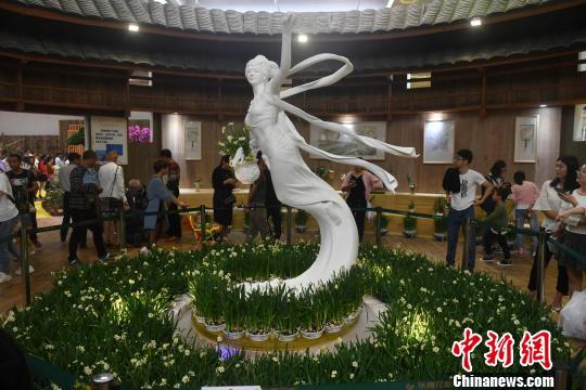 图为漳州水仙花展区。吕明 摄