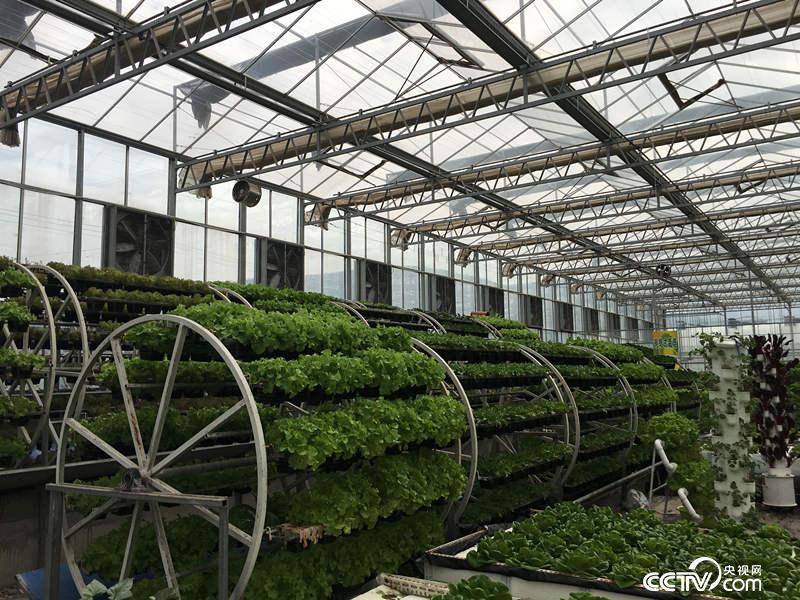 武山县蔬菜科技示范园区
