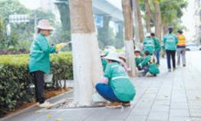 绿化作业人员正在给行道树刷白