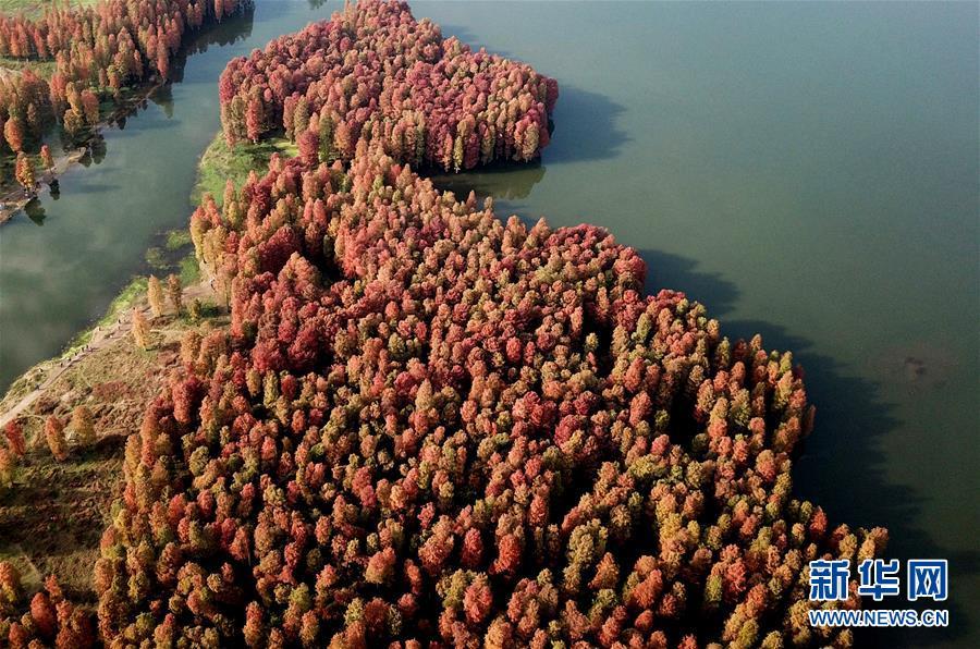 xinhua china anhui laian pond cypress scenery scenery - 900×596