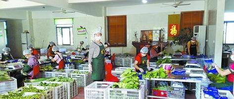可追溯生鲜蔬菜包装现场