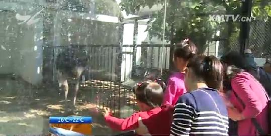 不文明观赏:把小朋友抱上围栏