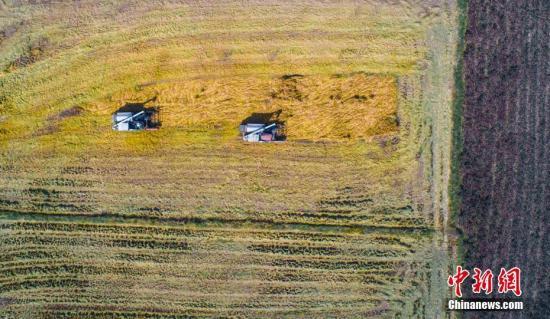资料图:晚稻丰收。赵春亮 摄