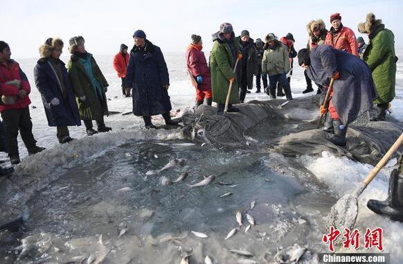12月14日,在中国第七大淡水湖——吉林查干湖冰面上,渔夫们将一条条鲜活的大鱼捞出水面,上演了一场冬日渔歌。