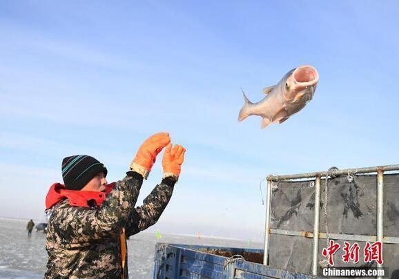 渔夫将一条大鱼丢到车上。