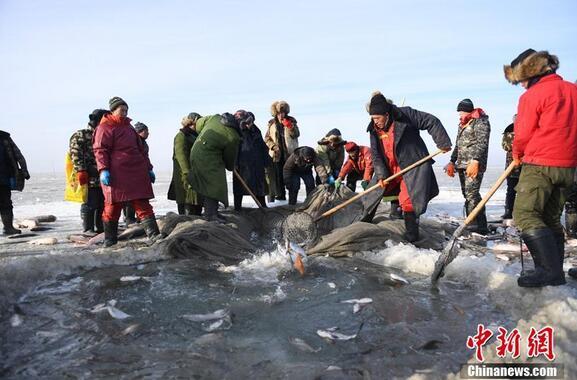 严寒抵挡不住渔夫们捕鱼的激情,将一条条鲜活的大鱼捞出水面,上演了一场冬日渔歌。