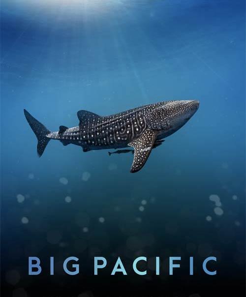 太平洋qq大师_《大太平洋》——讲述与众不同的海洋故事