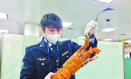 截获的大龙虾。