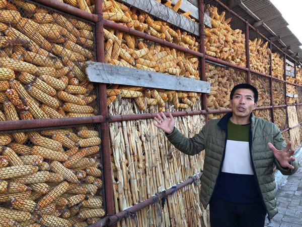 ↑何景生同村的黎克学站在自己搭建的科学储粮仓前,容量约8万斤的储粮仓里满谷满仓。