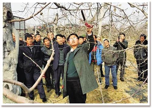 向果农讲解冬季苹果树剪枝注意事项.雷 婷摄-苹果种不好,我就不走