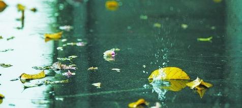 雨水淅淅沥沥,飘落的树叶也是雨中一景
