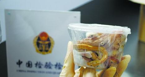 邮寄包裹之塑料碗中装着活蛇