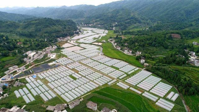 恒大援建的蔬菜基地