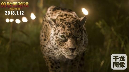 美洲豹虎视眈眈