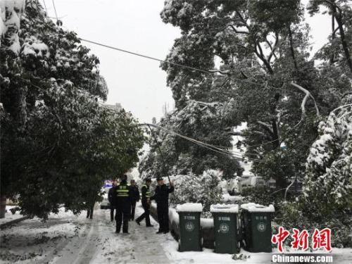 资料图:湖北十堰,积雪压断树枝。 刘英 摄