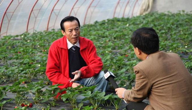 """""""草莓教授""""姜卓俊的小目标:让草莓全年不间断新鲜上市"""