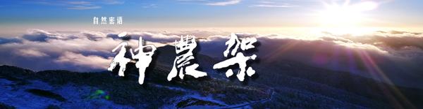 ↑ 点击进入 大型自然类纪录片《自然密语——神农架》中央新影集团官网专题报道