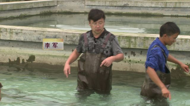 sohu邮箱 他们养鱼不卖,竟然还能年入千万!到底是商机还是陷阱?