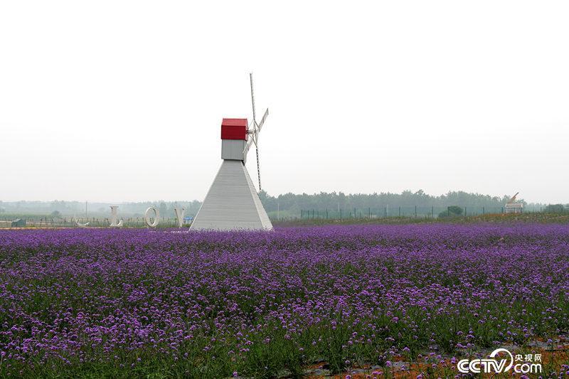 小岗村发展观光旅游业,打造农业科技园区。(殷兆松/摄)