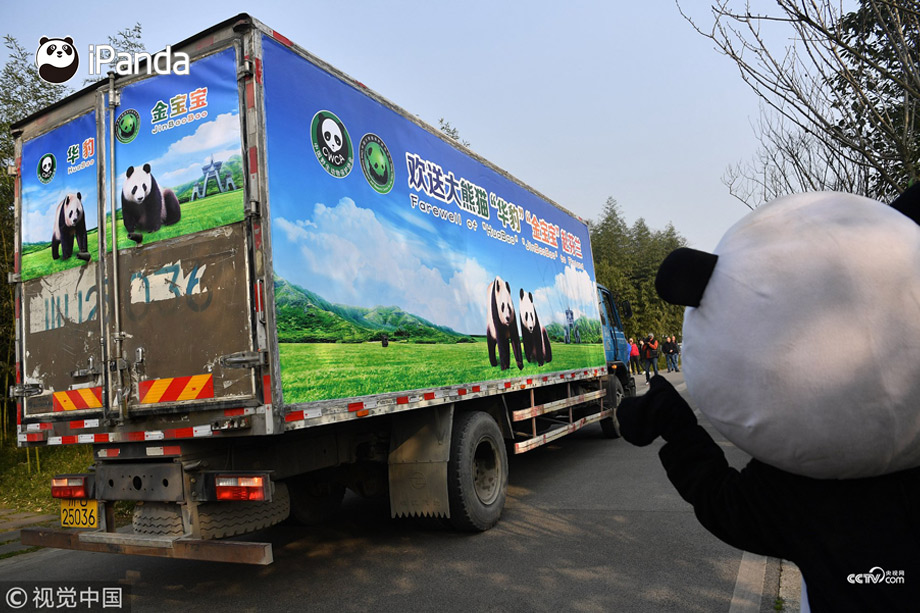 A pair of giant pandas have departed a panda base in Sichuan Province bound for Finland on a 15-year research project.